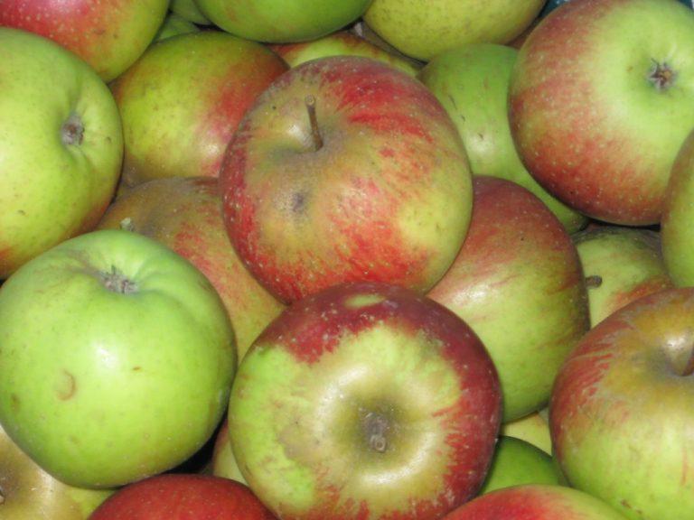 Dorsten und Apfelbäume