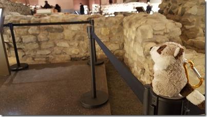 Waschbär vor Mauerresten der Kaiserpfalz